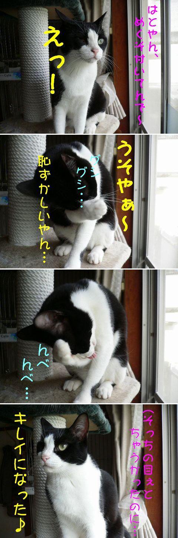 猫にSweets-はとやん