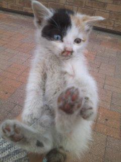 猫にSweets-110517_1740~01.jpg