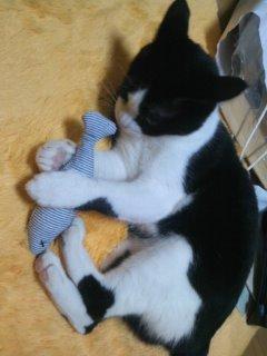 猫にSweets-110525_2201~01.jpg