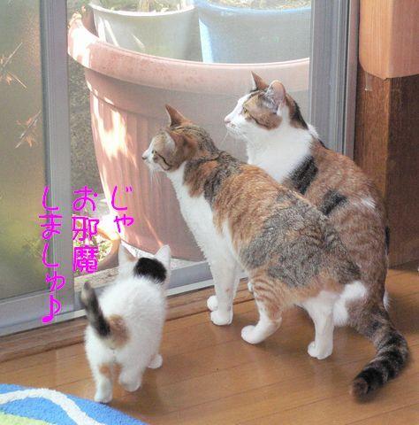 猫にSweets-三毛猫ず