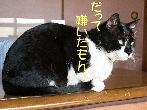 猫にSweets-ジージョ
