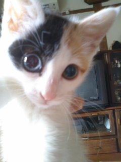 猫にSweets-110610_1113~01.jpg