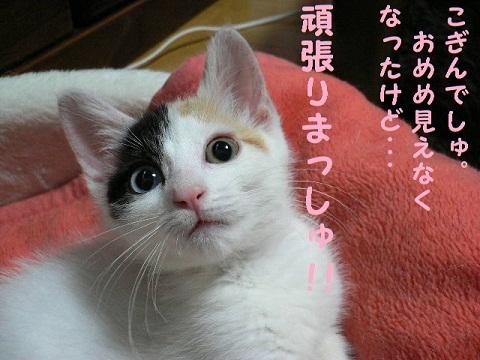 猫にSweets-こぎんちゃん
