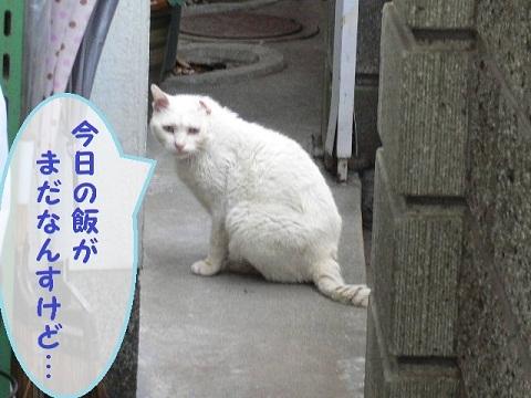 猫にSweets-シロップ