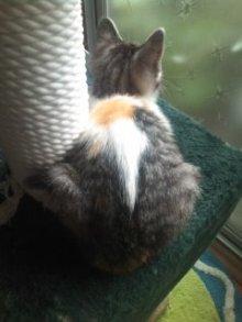 猫にSweets-110619_1056~01.jpg