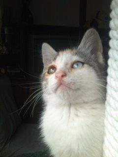 猫にSweets-110619_1055~02.jpg