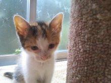 猫にSweets-SN3M0117.jpg