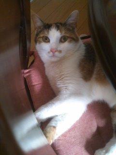 猫にSweets-110625_1538~01.jpg