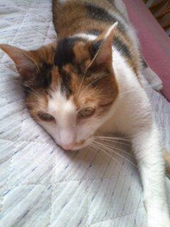 猫にSweets-110625_1724~01.jpg