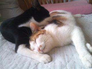 猫にSweets-110625_1729~01.jpg