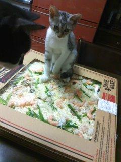 あまねこ手帖-PIZZA