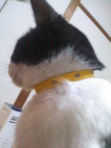 あまねこ手帖-黄色の首輪