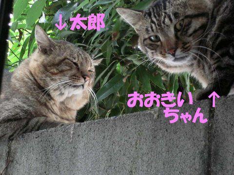 あまねこ手帖-2007/9/27