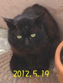 あまねこ手帖-黒猫