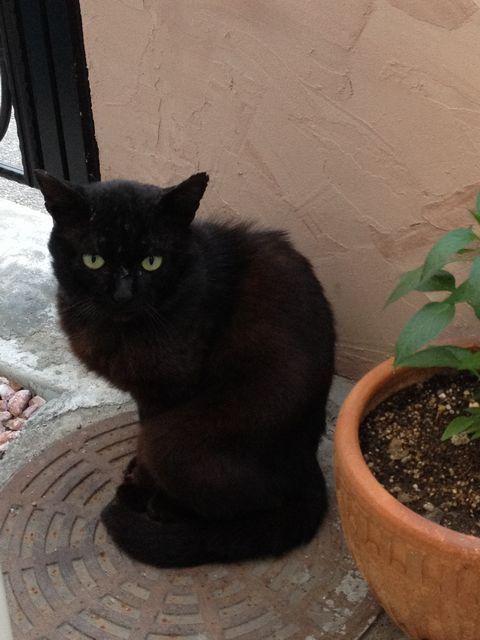 あまねこ手帖-chat noir