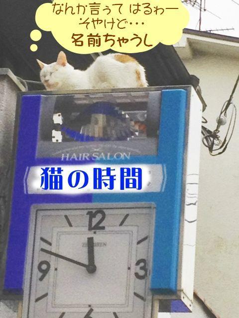 あまねこ手帖-散髪屋の猫