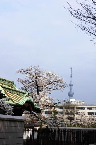 201303上野・寛永寺の門とスカイツリー