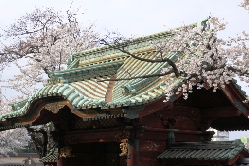 201303上野・寛永寺の門と桜