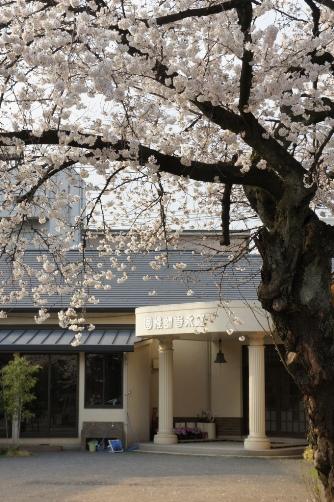 201303上野・寛永寺幼稚園