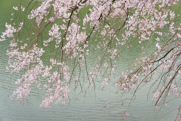 半蔵門2013 お濠と枝垂れ桜