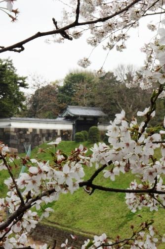 半蔵門2013 半蔵門と桜