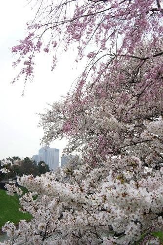 半蔵門2013 霞ヶ関