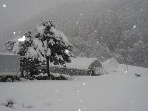 2012.11.15畑