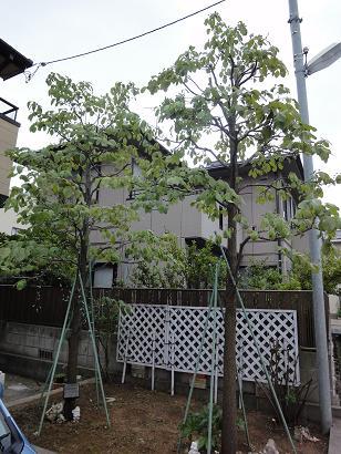 ハナミズキ花壇after