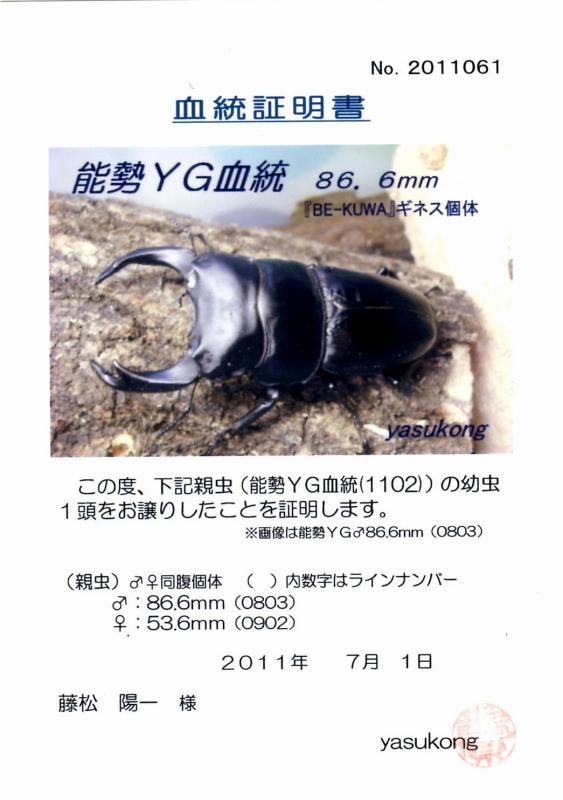 201186653601 530mms