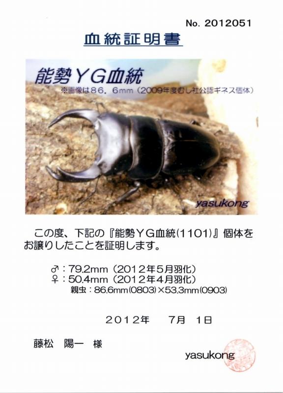 2011866533T1 792mm x 504mms