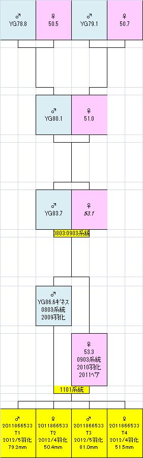 2011866533 T1234系統図