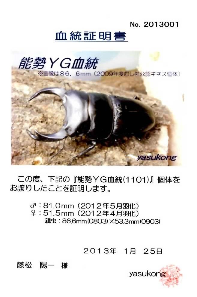 2011866533T3 810mm x 515mm