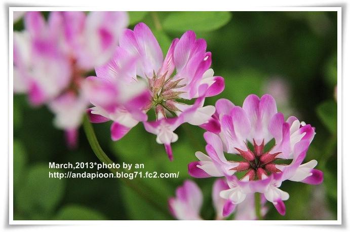 20130328_4986.jpg