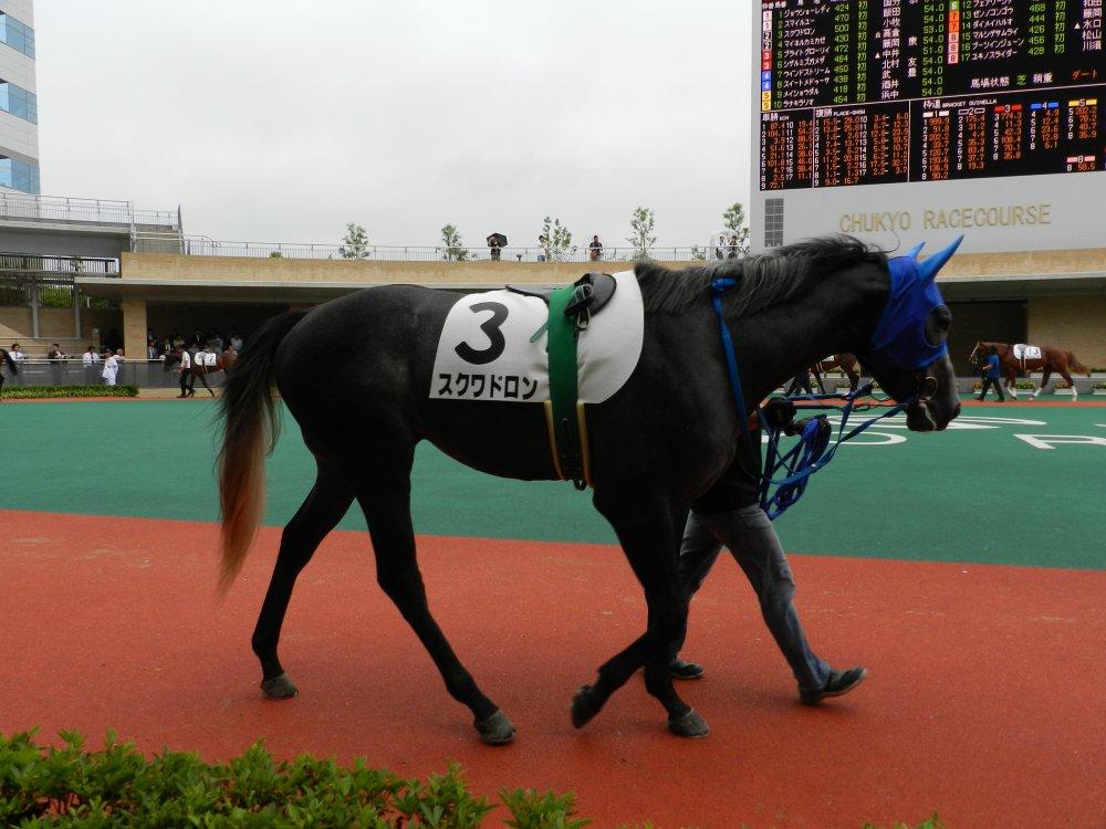 スクワドロン 新馬 1