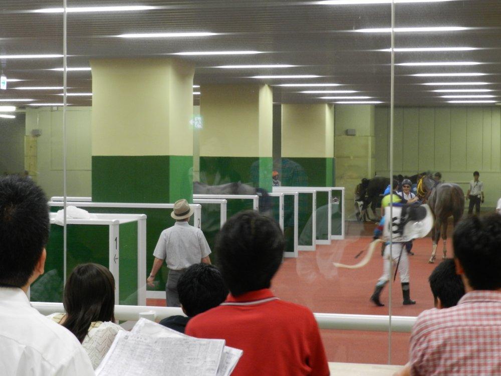 中京競馬場 勝ち馬ビュー