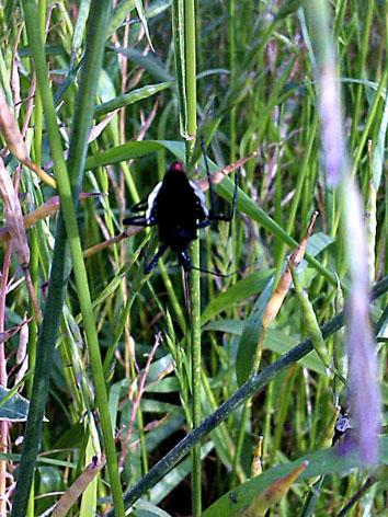 謎の黒い虫