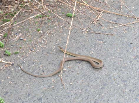 七月のココアとヘビ2