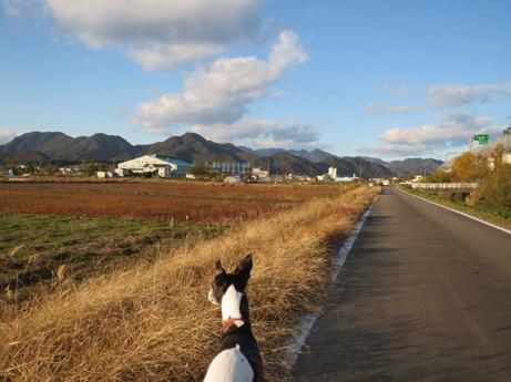 ココアと秋の空