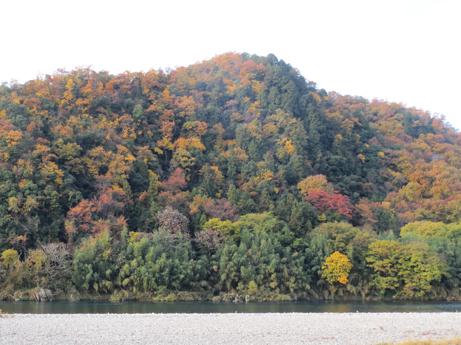 長良川の紅葉1