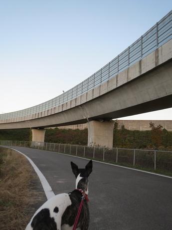 高速のアオサギ1