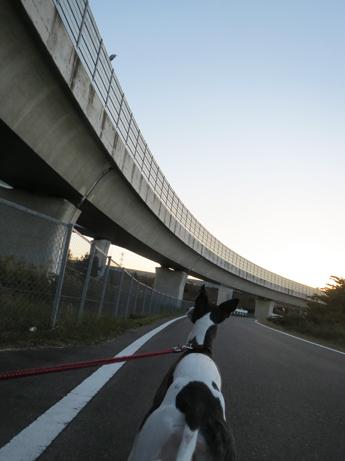 高速のアオサギ2