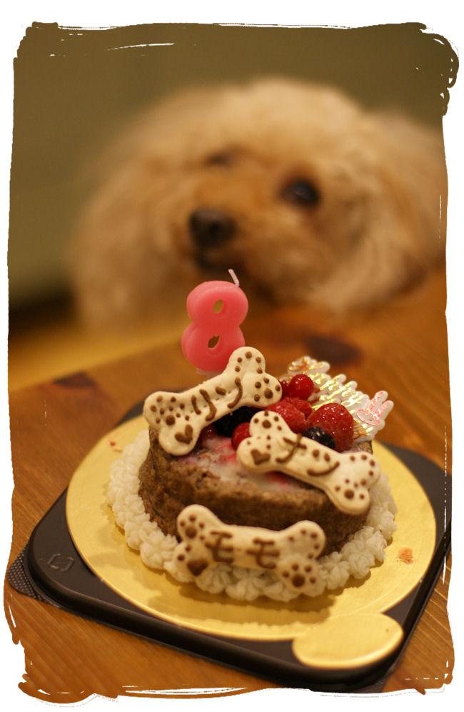 DSC02397-cake.jpg