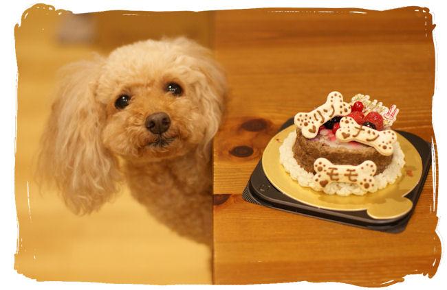 DSC02415-cake.jpg