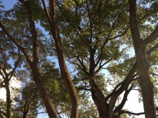 木々からの青空