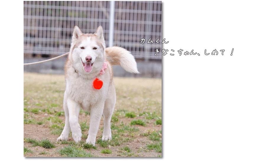 DSC_1834m1