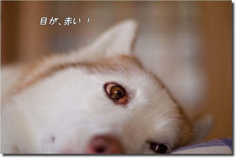 DSC_0211m1.jpg
