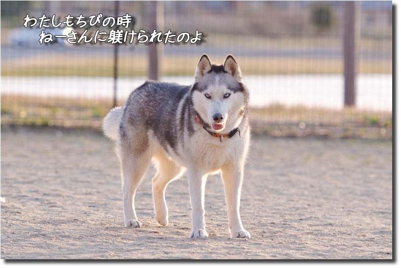DSC_9656k1.jpg