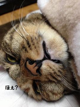 IMG_0418.jpg