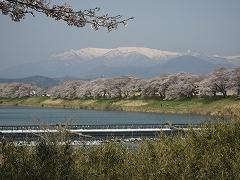 一目千本桜2013.4.14_1
