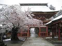 随身門の雪見桜